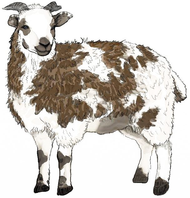 Splendid Spotted Sheep, LLC