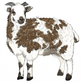 sheep-logo-e1520653346939.jpg